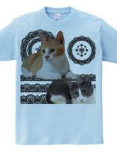 猫とレース