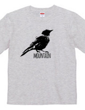Mountain Bluebird 01