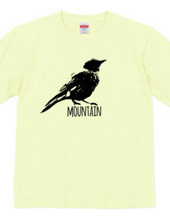 Mountain Bluebird 01