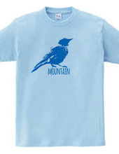 Mountain Bluebird 02