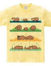 mini hippo family