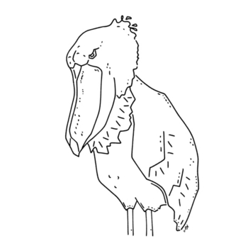ハシビロコウ 動かない鳥 動物イラスト