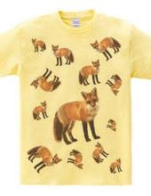 FOX CROWD
