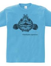 大きなフサギンポ (Chirolophis japonicus)