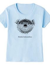 ハリセンボン(Diodon holocanthus)