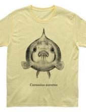 ピンポンパール(Carassius auratus)