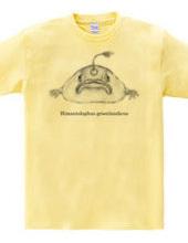 チョウチンアンコウ (Himantolophus groenlandicus)