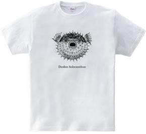 ハリセンボン(中)(medium size design)