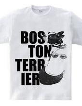 ボストンテリア インパクト