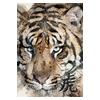 [Tiger] watercolor design