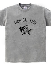 トロピカルな魚