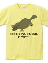 生きる化石_カモノハシ