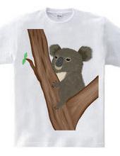 コアラ 抱っこあら