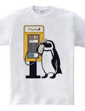 ケープペンギン・トーク